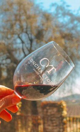 Indústria VCT: Tudo sobre a vinícola e seus deliciosos vinhos